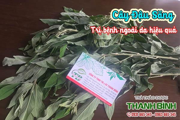 cây đậu săng